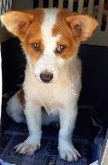 전남 목포 현대산업개발아파트 부근에서 흰황색 강아지 발견 보호..차도 배회