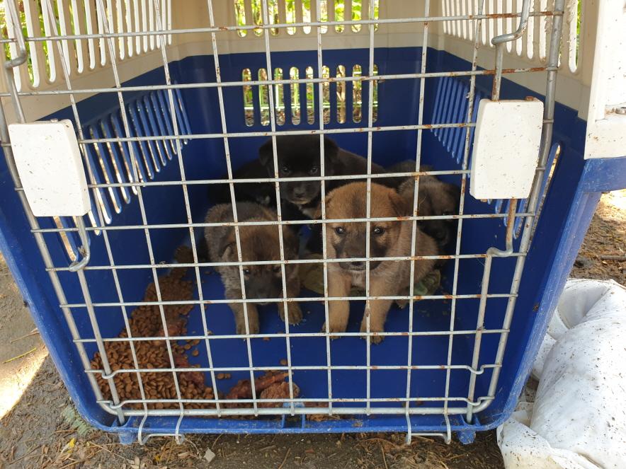 경남 함안 가야읍 토마토하우스에서 갈검색 강아지 발견 보호