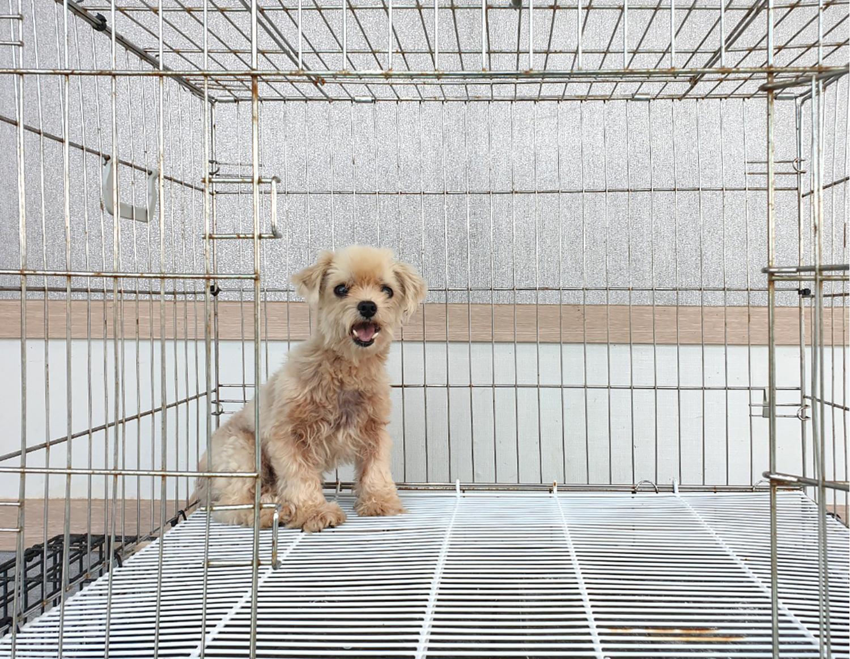 경기 여주 점동면 처리에서 크림색 강아지 발견 보호