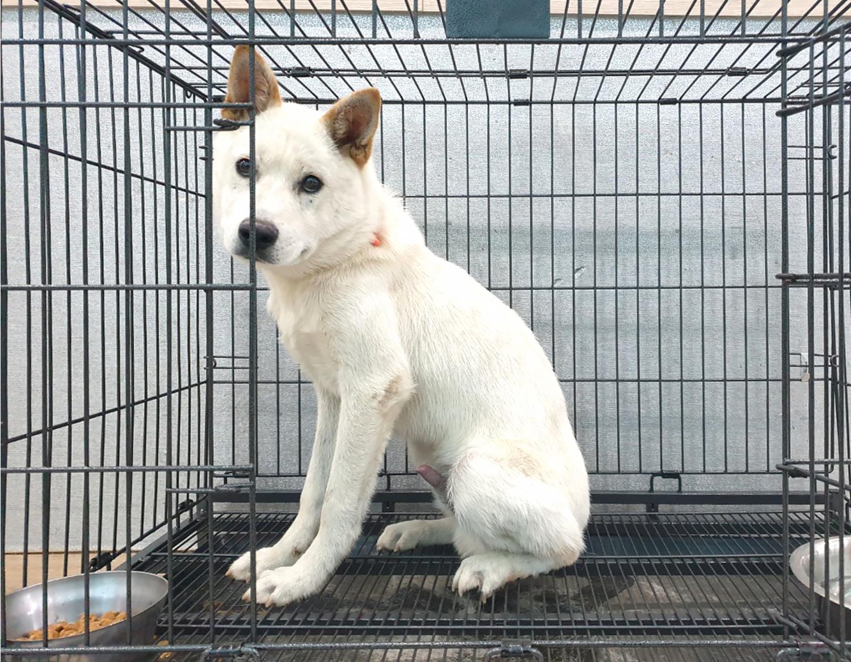 경기 여주 흥천면 효지리에서 빨간 목띠 흰색 강아지 발견 보호