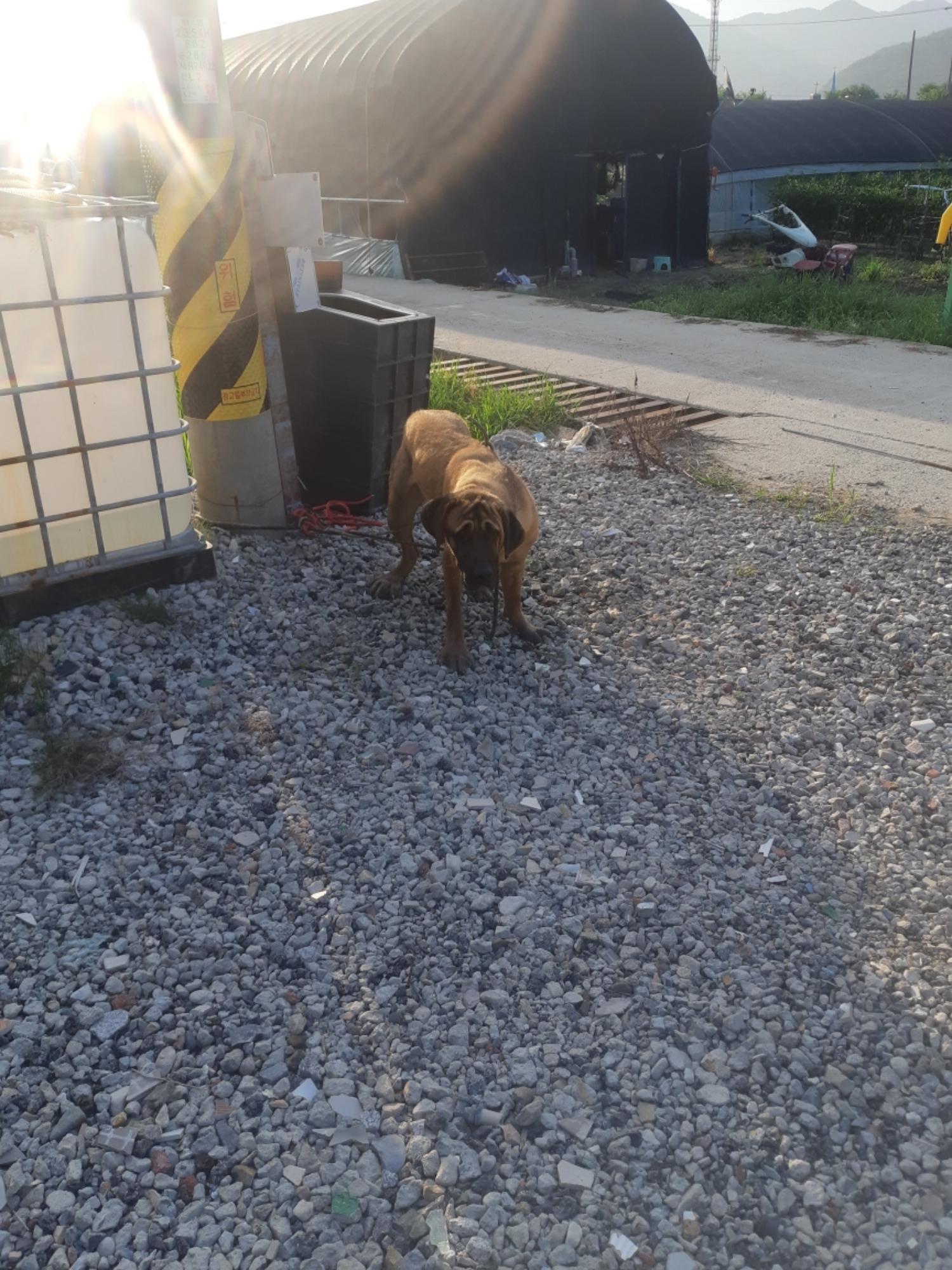 충북 옥천 군서면 은행리에서 고동색 강아지 발견 보호