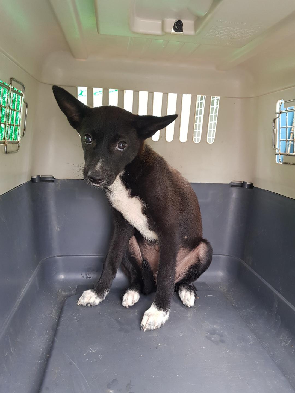 전북 정읍 용계동에서 검흰색 강아지 발견 보호