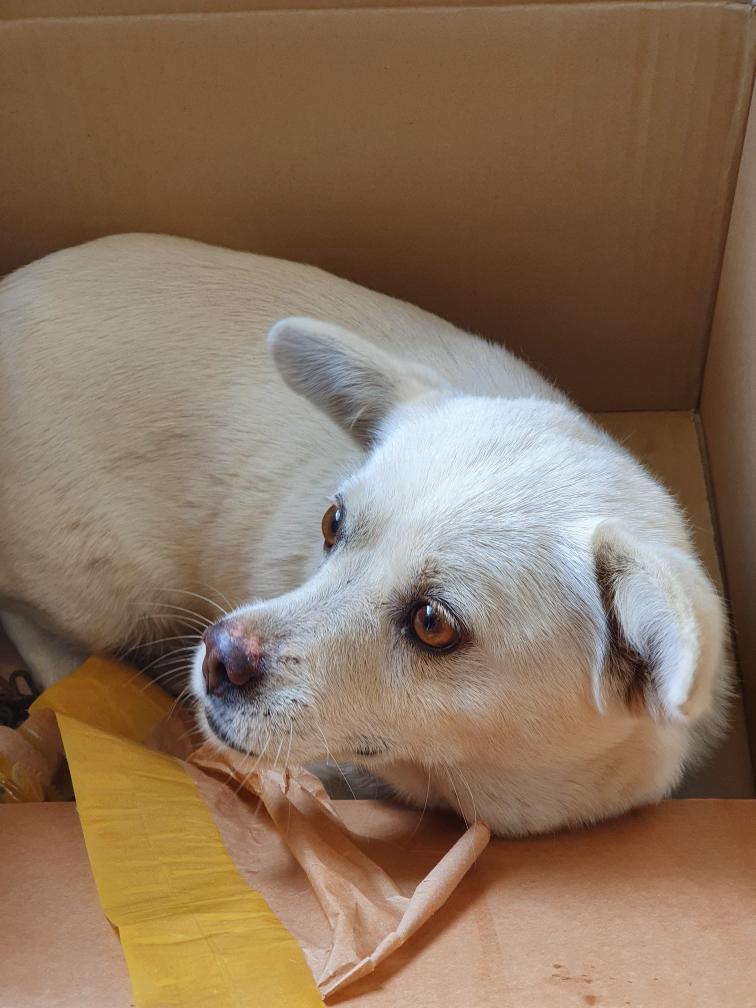 충북 옥천 옥천읍 하계리에서 아이보리색 강아지 발견 보호