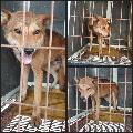 경기 화성 봉담읍 수기리에서 갈색 강아지 발견 보호