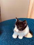 서울 마포구 합정역 스타벅스 앞에서 새끼 고양이 발견 보호